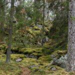 Tuhnunvuoren kallioita.
